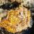 Quelques belles larves du plancton marin – 2